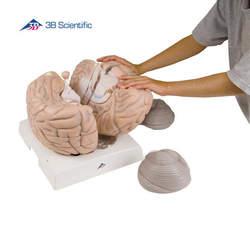 דגם מוח ענק ללימוד