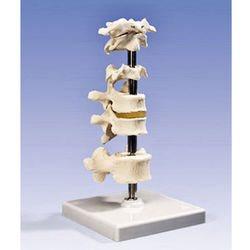 דגם 6 חוליות עמוד שדרה