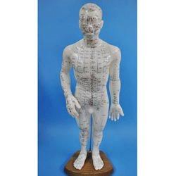 דגם אדם 50 ס'מ כולל מרידיאנים