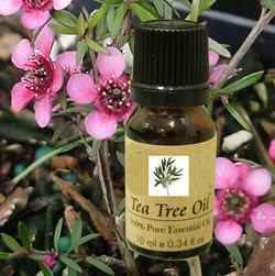 שמן עץ התה
