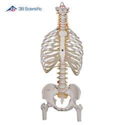 דגם עמוד השדרה