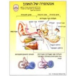 מפת אנטומיה של האוזן בעברית