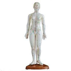 מודל גוף אישה לאקופנטורה