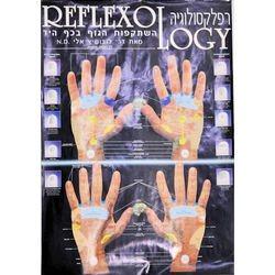 מפת רפלקסולוגיה של כף היד