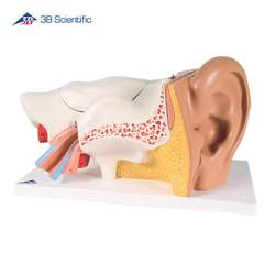 מודל אוזן אנושית בעל 6 חלקים