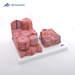 דגם מיקרו אנטומי של הכבד 3B Scientific